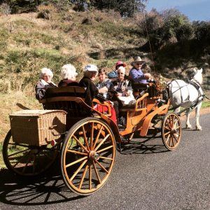 Ladies on open carriage ride with montana through adelaide hills following a vintage tea